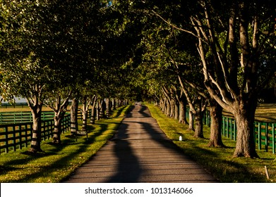 A scenic view of a one-lane, tree-lined road hemmed in by black fences by storied horse farms in the famed central Kentucky Bluegrass region.