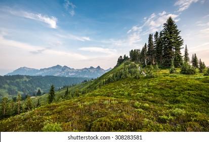 scenic view  in paradise trail area in Mount Rainier,WA,USA