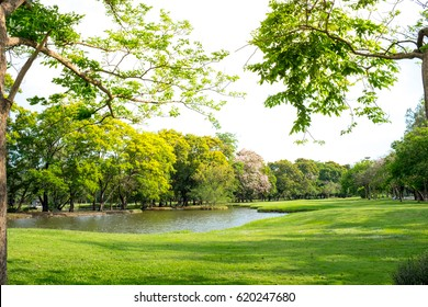 Scenic view of the park in the center of the big city in the summer. With a lagoon in the middle and green trees. In the atmosphere of evening light