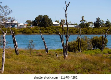 Scenic view of the parkland from  the cycle way through the Leschenault Estuary  mangrove reserve  in Bunbury Western Australia on a fine morning in late winter.