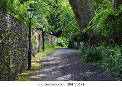 Scenic View of a Path on a Green Tree Lined Leafy Lane