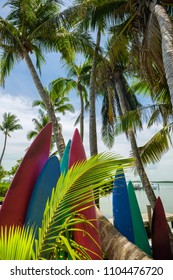 Scenic view of the popular Florida Keys along the bay with surfboards and coconut palm trees.