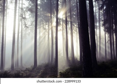 Scenic view of rays of sun beaming through the forest