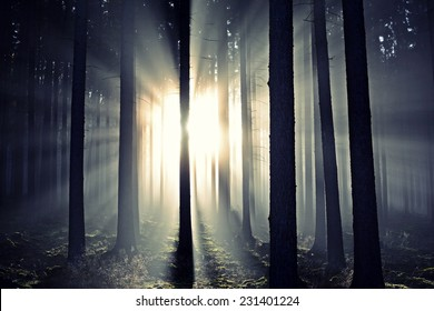 Scenic view of rays of sun beaming through the silhouette trees.