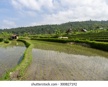Scenic view of rice fields, Bali, Indonesia