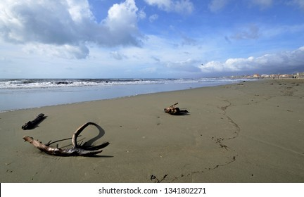 scenic view of sandy beach in Versilia coastline with some branch tree washed on shore
