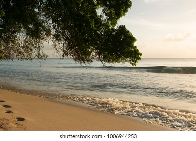 Scenic view of sea shore and ocean waves under a tree