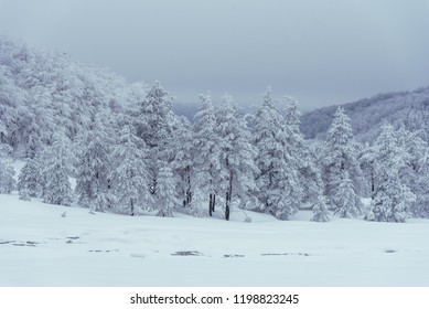 Scenic view of snow covered trees at forest.