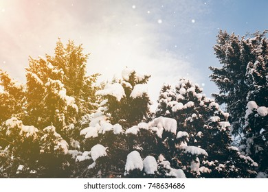Scenic view of snowflakes falling on fir trees with snow covered branches, blue sky background with the glow of the sun in the corner