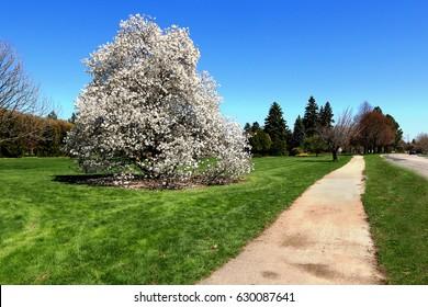 Scenic view in spring, Niagara, Ontario, Canada