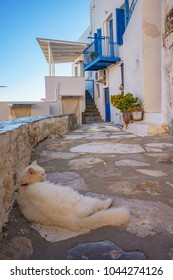 Scenic view with street cats in the narrow paved streets of Ermoupolis against a deep blue sky. Syros island, Cyclades, Greece, Europe.