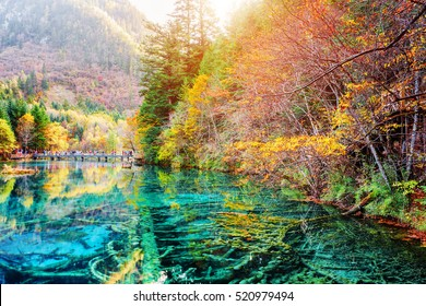 Scenic view of submerged tree trunks in azure crystal clear water of the Five Flower Lake (Multicolored Lake) among autumn woods in Jiuzhaigou nature reserve (Jiuzhai Valley National Park), China.