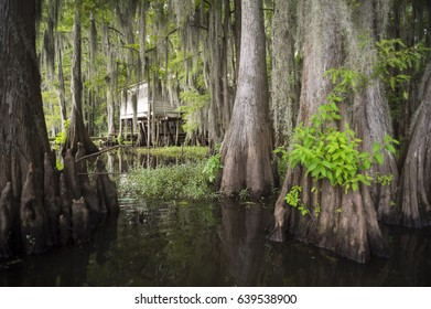 Scenic view of swampland in the American South with among the roots of bald cypress trees and Spanish moss in Caddo Lake, on the Texas - Louisiana border