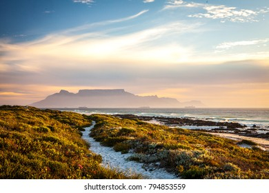 scenic view of tablemountain cape town south africa at sunset with fynbos dunes in foreground