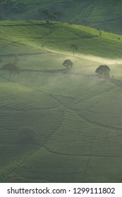 Scenic view of tea plantation covered by mist, Bandung, Indonesia