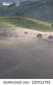 Scenic view of tea plantation in the misty morning, Bandung, Indonesia