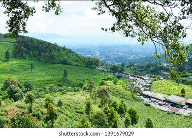 scenic view of tea plantations at Puncak, west java Indonesia