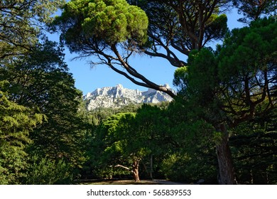 Scenic view through the crowns of trees in Vorontsov park in Alupka town towards top of Ai-Petri mountain in light of summer morning sun, Crimea, Russia.