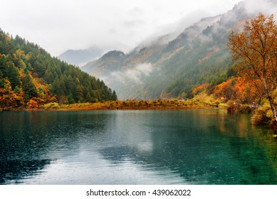 Scenic view of the Tiger Lake among colorful fall forest in rain. Wooded mountains in fog are visible in background. Jiuzhaigou nature reserve (Jiuzhai Valley National Park), China. Autumn landscape.