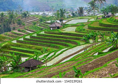 Scenic view of traditional Balinese tropical terraces. Jatiluwih village people working on green rice fields. Culture, art and nature of Bali and Java islands, popular travel destinations in Indonesia