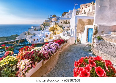 Scenic view of traditional cycladic Santorini houses on small street with flowers in foreground. Location: Oia village, Santorini, Greece. Sunset view point. Holidays background.