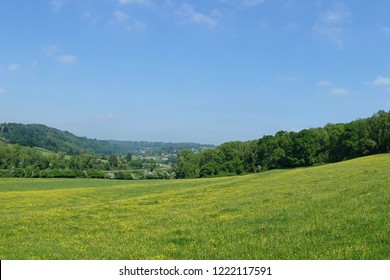 Scenic View of a Tree Line Lush Green Grass Field