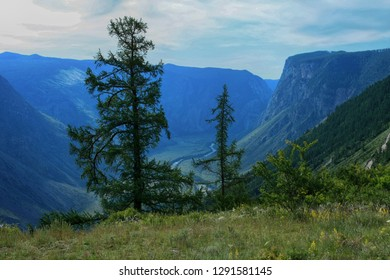 Scenic view of trees and the valley of the Chulyshman river in Altai in Russia