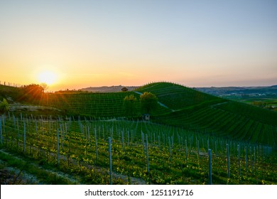Scenic view of vineyard hills with sun rays at sunset in spring, Barbaresco, Piedmont, Italy