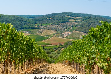 Scenic view of a vineyard in Montalcino (SI), Italy.