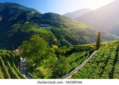 Scenic view of vineyards and apple tree orachards in Trentino-Alto Adige region of South Tyrol, Italy. Beautiful small Alpine village on a background.