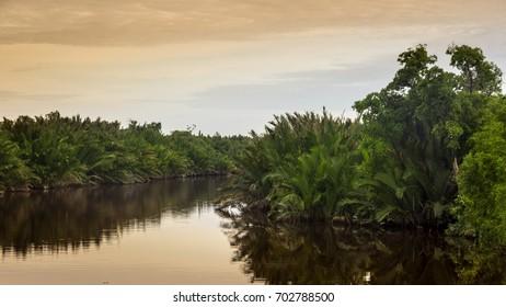 Scenic view of wild tropical jungle on the Borneo island, Indonesia. Kalimantan