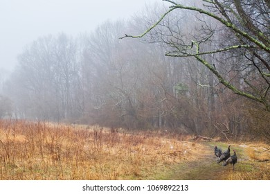Scenic view of wild turkeys on a nature trail on a foggy day.
