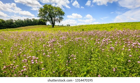 Scenic view of wildflowers field in Central Kentucky in summer