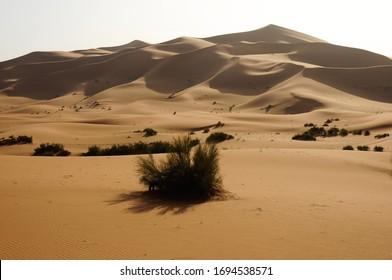 Scenic views in the desert