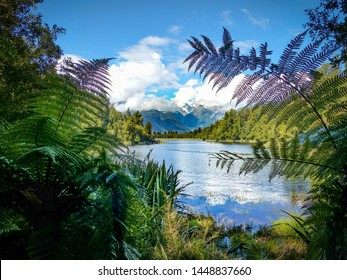 Scenic views of lake matheson through trees and ferns. Mountain backdrop with blue sky and white fluffy clouds.