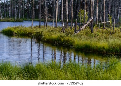 scenic wetlands with country lake or river in summer. reflections in water with forest and grassland