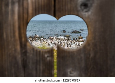 Scenic wildlife and nature with water, birds and seals seen through a wooden peephole outdoors in Sweden.