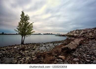 Scenic Windsor Ontario Riverfront View Solitary Tree