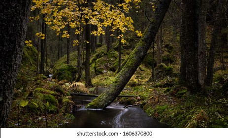 Scenic woodland landscape with a leaning tree in a creek