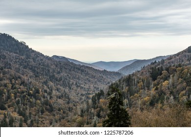 Scenics near Newfound Gap in the Great Smoky Mountains National Park