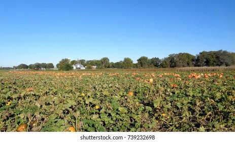 Schaake's Pumpkin Patch, October 7th 2017, Lawerence Kansas