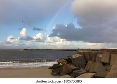 SCHEVENINGEN, 10 November 2013 - Seagulls flying over the Scheveningen harbor after a heavy rain shower