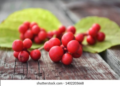 Schisandra berry on wooden table on outdoor background. Freshly picked berries.