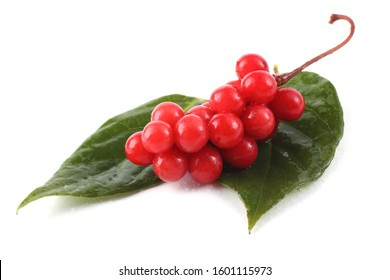 Schisandra chinensis (five flour fruit, magnolia berry) on leaves
