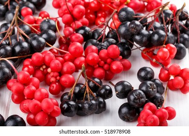 Schisandra chinensis or five-flavor berry. Aronia or chokeberry. Fresh red and black ripe berry on white.