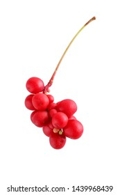Schisandra chinensis or five-flavor berry. Fresh red ripe berry isolated on white background.