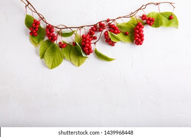 Schisandra chinensis or five-flavor berry. Fresh red ripe berries with leaves on white background. Top view. Copy space. Food background.