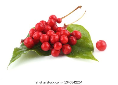 Schisandra Chinensis isolated on white