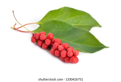 Schisandra chinensis, magnolia-vine, Chinese magnolia-vine, schisandra, whose fruit, magnolia berry or five-flavor-fruit. Isolated on white background.