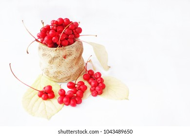 Schisandra red in ceramic bag. Red ripe schizandra in bucket. Five flavor berry. Fresh red ripe berries isolated on white. Crop of ripe fruits